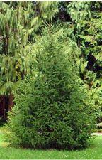 Maluwa die sprechende Pflanze by 4Lineal4