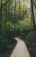 EL Bosques de los Deseos by XThe_HollowX