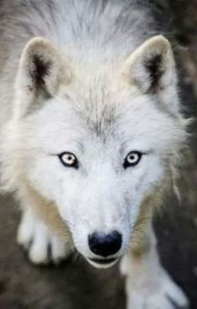 Diario di un Guerriero by Jade_The_Wolf_