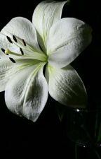 وردتي البيضاء  by talenamourad