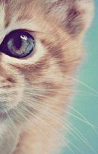 [12 chòm sao] Meo! Anh yêu em by SUGA_2k