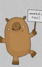 Wombats Rule! {ON HOLD} by BlueEyedIridescence