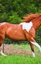 Gone FAYZ/horse shifter by PuraRazaCabalo
