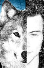 My perfect wolf (Harry Styles y tu) by vatia6969