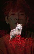 Wolf /ChanBaek/ by Yeloque