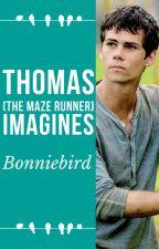 Thomas ~ The maze runner by bonniebird