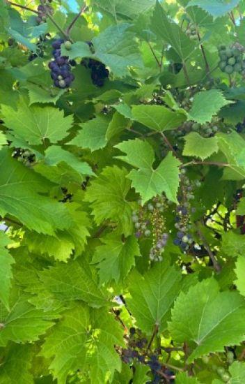Đọc Truyện Giậu mồng tơi năm ấy [TẠM DỪNG] - TruyenFun.Com