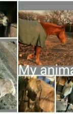 My animals In Real Life by -The-Rescue-Horse-