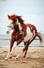 frasi sui cavalli  by Genius_Stark737