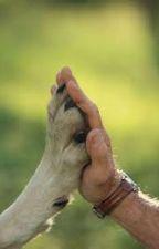 tel maître tel chien , le combat de deux être by JeanmickaelBouchoux