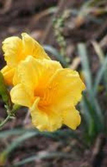 8 Yellow Flowers