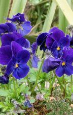 Violetas by Tecnonopal