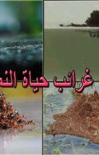 غرائب حياة النمل by memetbro2018