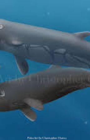 Megalodon vs sperm whale