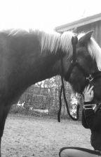 Pferde - Verstehen,pflegen und reiten by user40047696