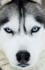 Einsamer Wolf by Kitana11062007