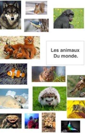 Les animaux du monde :