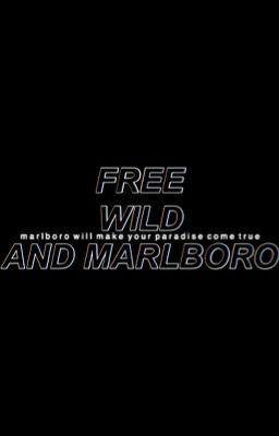 Đọc truyện kookv, free, wild and marlboro