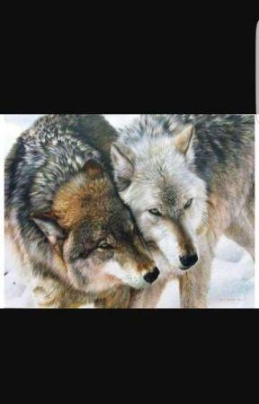 REAL werewolf info -