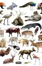 My Favorite Animals 《A-Z》 by FrankW821