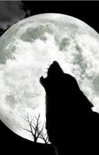 A Not So Ordinary Werewolf by secretadmirer2