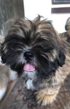 Slaughter High  by OhyoGracie