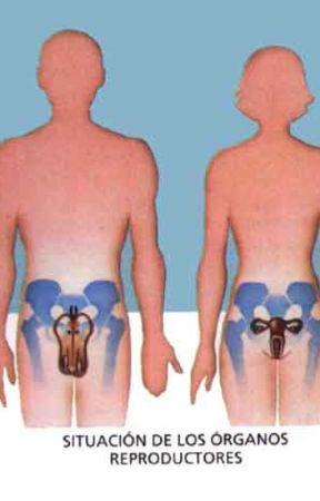 Anatomía del aparato reproductor - introduccion - Wattpad