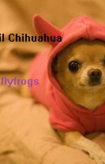 The evil Chihuahua by Totallyfrogs
