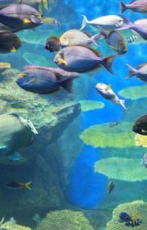 Das Leben Im Wasser Wasser Bilder Zum Ausmalen Wattpad