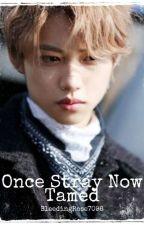 Once Stray Now Tamed (Lee Felix x Reader) by BleedingRose7098