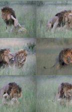 Omosessualità negli animali by Tsundere_LGBT