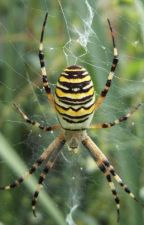 A  Spider's  Query by Mayvarsh