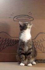 Кот-хранитель души твоей.... by Kariapelmeshka