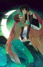 Untold Love (Mermaid! Lance X Avian! Keith) by saphiretheshipper