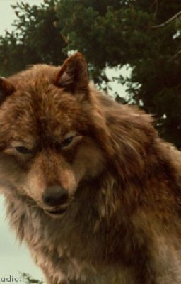 Bella S Family Are Werewolves Twilight Fanfiction Chapter 1 Wattpad