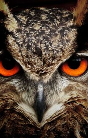 Amazing owl facts. by BantamOwl