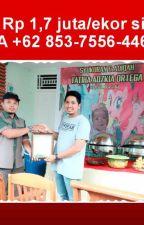 MURAH, WA +62 853-7556-4466, Catering Hajatan di Padang by abumushab