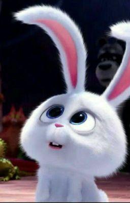 Đọc truyện vkook ☆ nuôi một bé thỏ cùng tuổi
