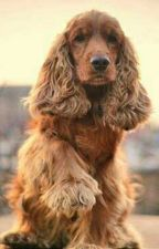 Собака с душою человека by NastyaMolchanovich
