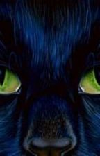 hidden (warrior cats fan fiction) by wierdgirllps