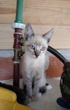 Un chico y su gato by Pieceoftrash4339