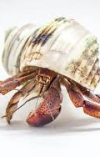 Hermit Crab Tales - Stories Written by Crabs, for Anyone. by HazelXWriter