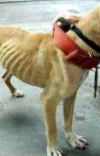 animal cruelty </3 by cheetara