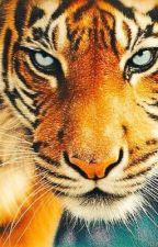 Geschichten vom Tiger by JaridFireFrost