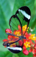 Monarch by Snowdragons