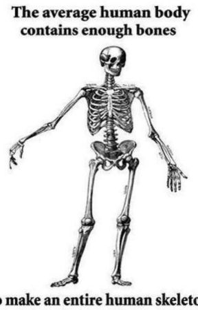 Anatomy and Physiology - Chapter One-Part One: Quiz Answers