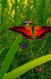 Butterflies by iloveejbforevaa