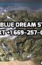 Buy blue dream Strain | legal blue dream | buy blue dream online by bluedreamstrain