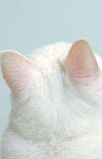 NoRen | Nhà Jeno có một em mèo