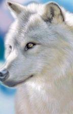 La sœur de MCcall ( Teen Wolf)[ Terminée] {En correction} by Onyx_fic